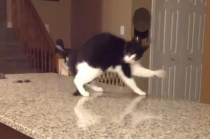 カウンターの上で斜め歩きをしながら転落する猫