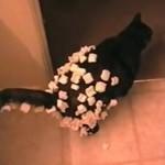 発泡スチロールを身にまとう猫