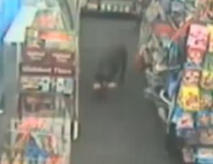 ペットフードを盗んだ犯人は3本足のワンコだった