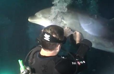 釣り糸が巻き付いてしまったイルカがダイバーに救助を求める