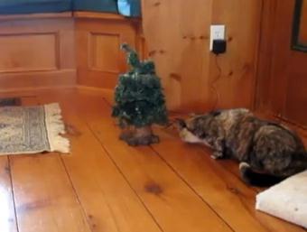 喋るクリスマスツリーに驚く猫
