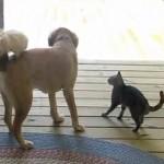 猫と目を合わせるのが怖いワンコ