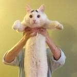 もの凄く困った猫