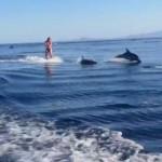 イルカと一緒にウェイクボード