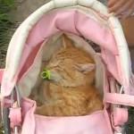 無理やり赤ちゃんにされてしまったネコ