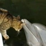 ネコと遊ぶイルカ