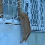 熱烈に愛するロシアの猫