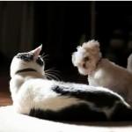 ネコ師匠に猫パンチを教えてもらう子犬