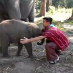 赤ちゃんゾウと侮るべからず