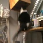 ネコ用隠し通路