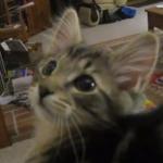 うええええええっ!変な鳴き方をする猫