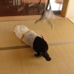 遊んでいる猫にスーパーフライングタックル!