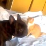 フレブルの命を狙うアサシン子猫