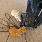 掃除機に集まる2匹の猫、スイッチをONにしたら…