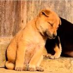 眠たくて仕方がないいろんな動物動画