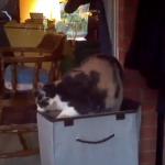 猫、予想通り落ちる