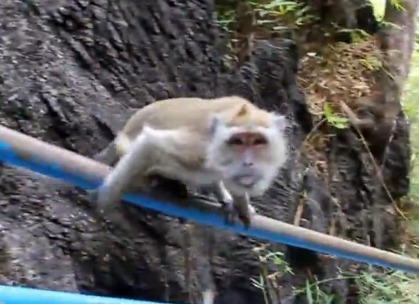 手すりを滑り台にして遊ぶお猿さん