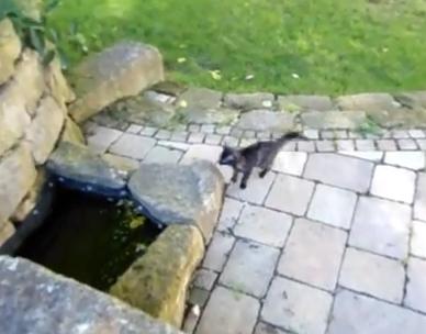 追いかけっこをしていた子猫、水に落ちる