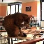 ハンガリーの猫カフェ
