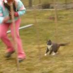 アジリティーにチャレンジする猫