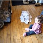 人間の赤ちゃんと会話するヤギ