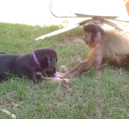 猿とワンコ、仲良く飴をシェアしていると思ったら…