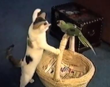 ネコ vs. オウム