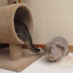 猫のしっぽと戦うウサギ