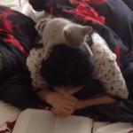 女性の頭の上から本を読む子猫
