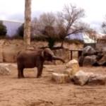 ドラムを叩く象