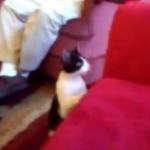 猫、水槽に向かってまっしぐら!