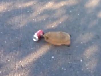 ソーダの缶を転がすハリネズミ