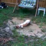 泥遊びで泥んこまみれのバセットハウンド