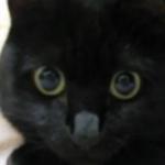 まっくろくろすけみたいな黒猫