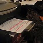 猫、プリンターから出てくる紙に突然攻撃