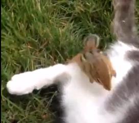 シマリス vs. ネコ