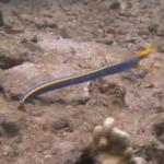 海に住む不思議な生物の映像