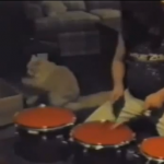 ドラミング猫