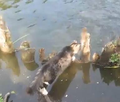 泳いでいる魚を捕まえた猫