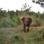 インド象に追いかけられる乗用車