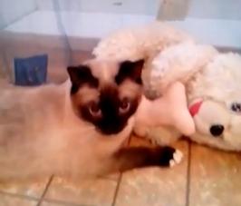 テレポーテーションした猫