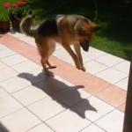 影と戦うワンコ