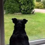 敷地に入った猫を見つけたワンコが行動に出る