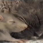 仲睦まじい猫とネズミ