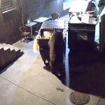 ゴミをBOXごと盗むクマ