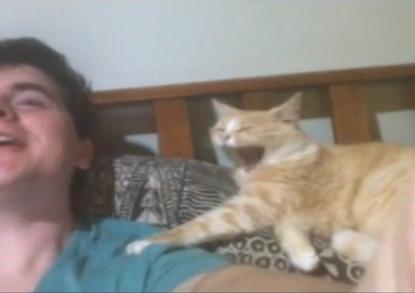 ネコにもあくびは伝染するようだ