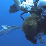 コバンザメに気に入られたダイバー