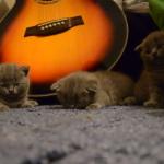 催眠術にかかったかのように眠る三匹の子猫