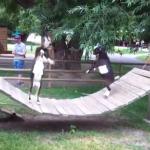 アスレチックの上で決闘を始める動物園のヤギ