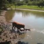 大きな魚を捕まえたワンコ